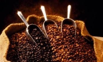 Выбор кофе для ресторана или кафе
